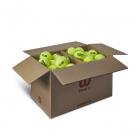 Wilson Triniti Club Tennis Ball Case (72 Balls) -